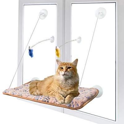 window cat perches