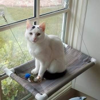 outdoor cat window perch