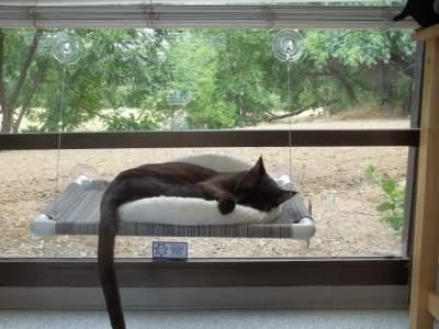 cat hammocks for windows