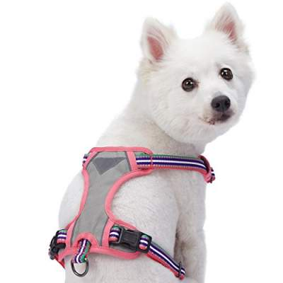 Best no pull dog harness first choice