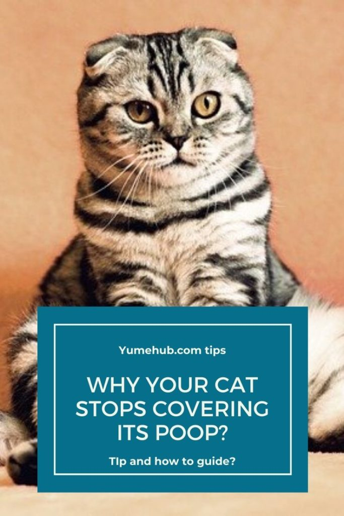 Why your cat stops covering its poop?