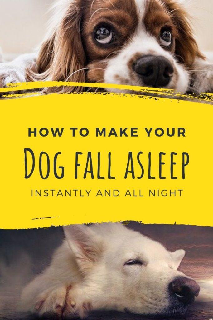 How to make your dog sleep?