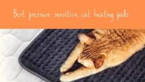 Best Pressure Sensitive Cat Heating Pads