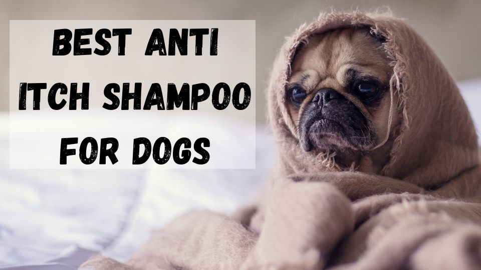 Best Anti-Itch Shampoo for Dogs, best allergy itch relief shampoo for dogs