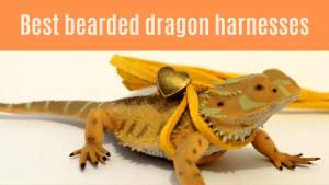 Best bearded dragon harnesses
