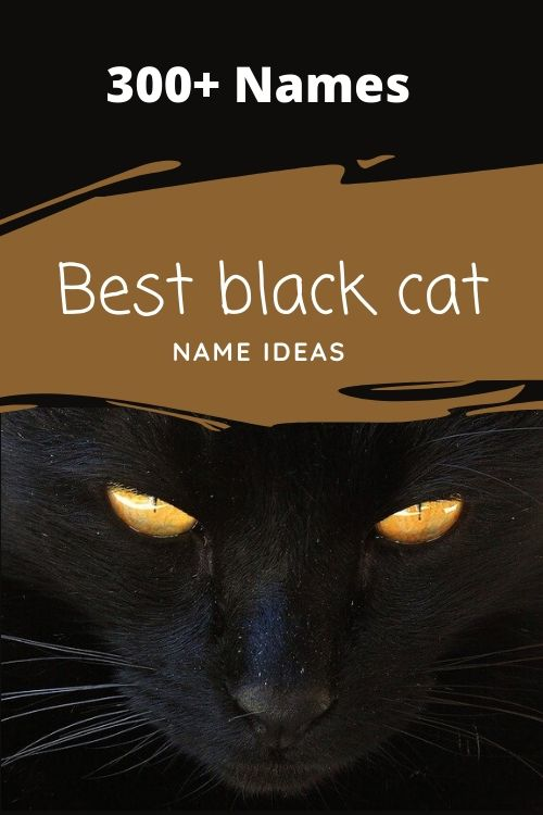 300 Unique And Popular Black Cat Names Male And Female 2020