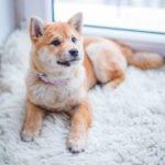 dog shampoo for sensitive, itchy skin