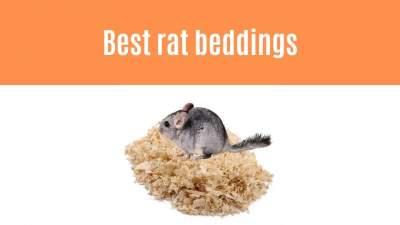 best rat bedding