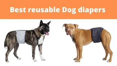 best reusable dog diaper