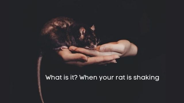 what is it? when a pet mouse is shaking