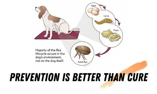 Prevention is better than cure, Best Flea Tick and Mosquito Prevention for Dogs
