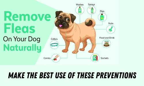 Make the best use of these preventions
