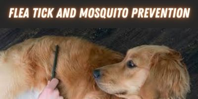 The Best Flea Tick & Mosquito Prevention for Dogs