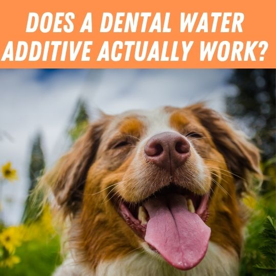 Does a Dental Water Additive Actually work