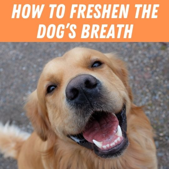 How to freshen the dog's breath