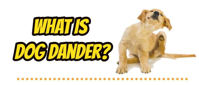what is dog dander