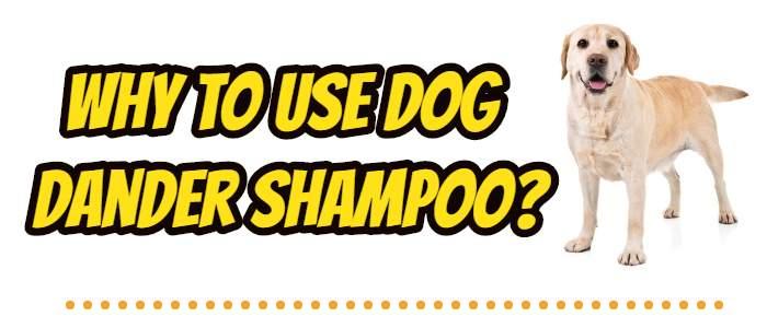 why to use Dog Dander Shampoo?