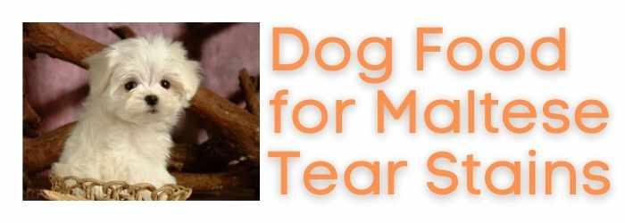 Best Dog Food for Maltese Food Stains