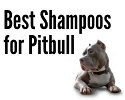 Best Shampoos for Pitbull
