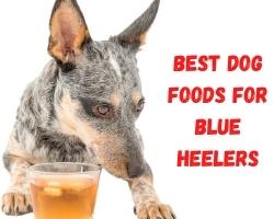 Best Dog Foods for Blue Heelers