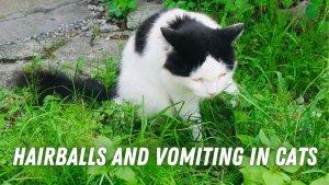 hairballs and vomiting