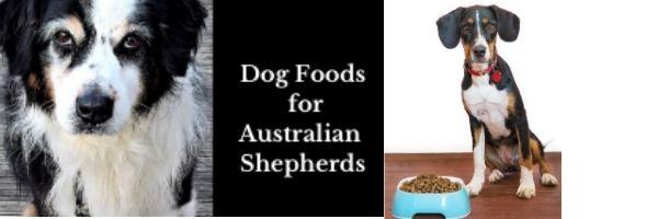 Dog Foods for Australian Shepherds