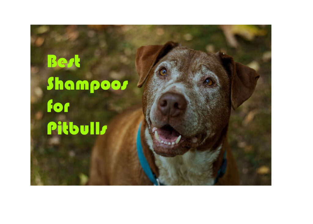 Best shampoos for pitbulls