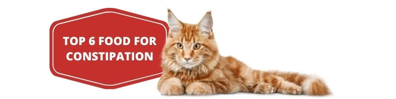 Best Cat Food for Constipation 1