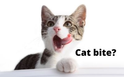 Why does my cat bite me then lick me? 12